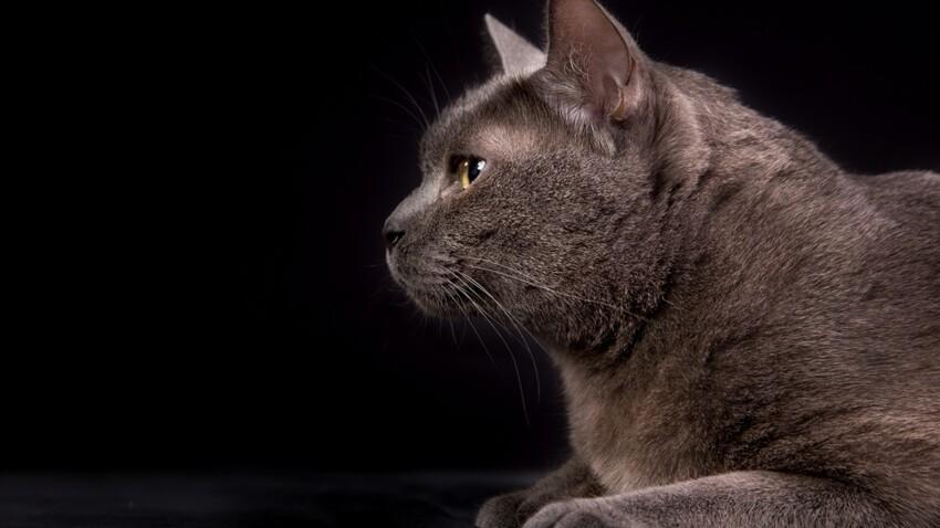 Quels sont chats les plus cotés ?