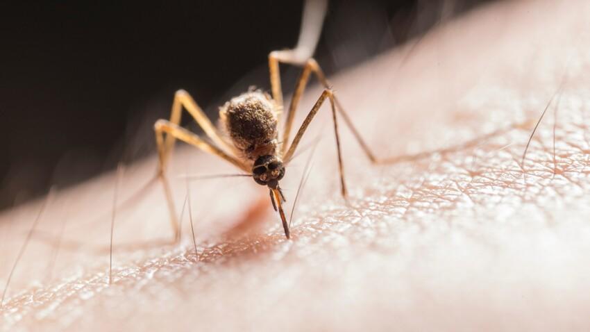Moustiques : pourquoi leurs piqûres démangent-elles ?