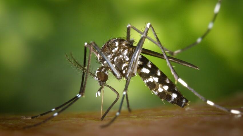 Zika, dengue, West Nile : 5 maladies qui arrivent en France à cause des moustiques