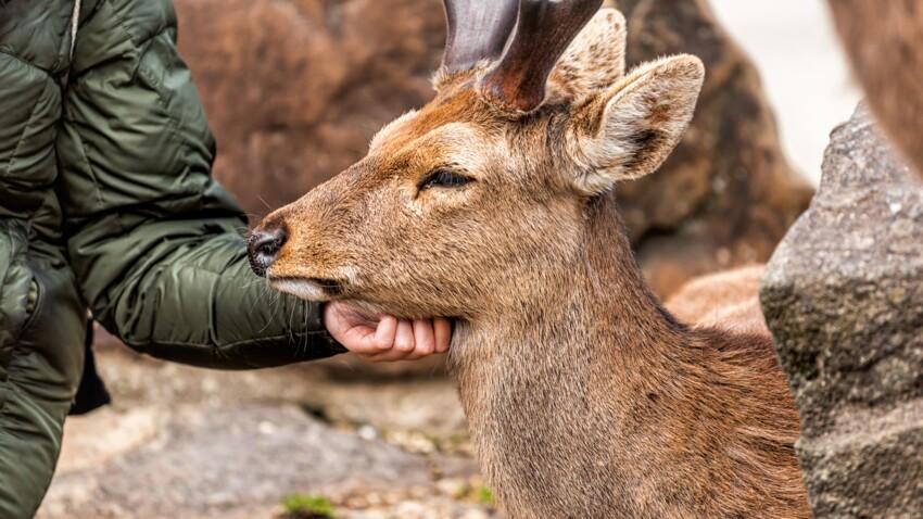 """Témoignage : """"A La Tanière, les animaux sauvages en détresse ont une retraite heureuse"""""""