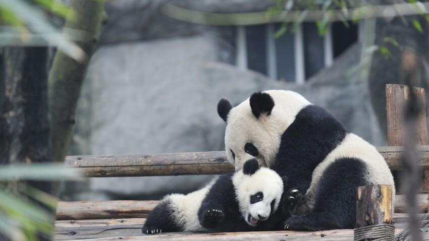 Faut-il fermer les zoos?