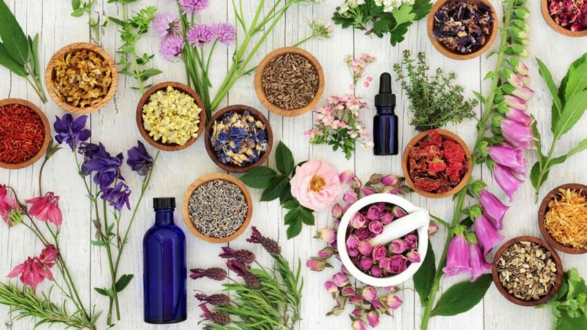 Arthrose, douleurs, sommeil, stress… 25 plantes surdouées !