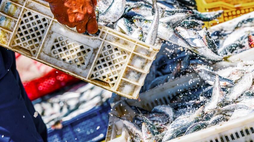 UFC Que Choisir dénonce la surpêche dans les mers européennes