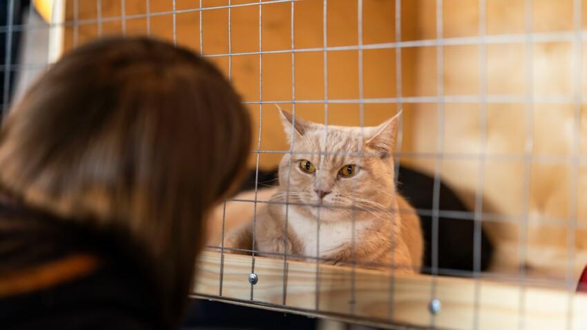 Tout savoir avant d'adopter un chat en refuge