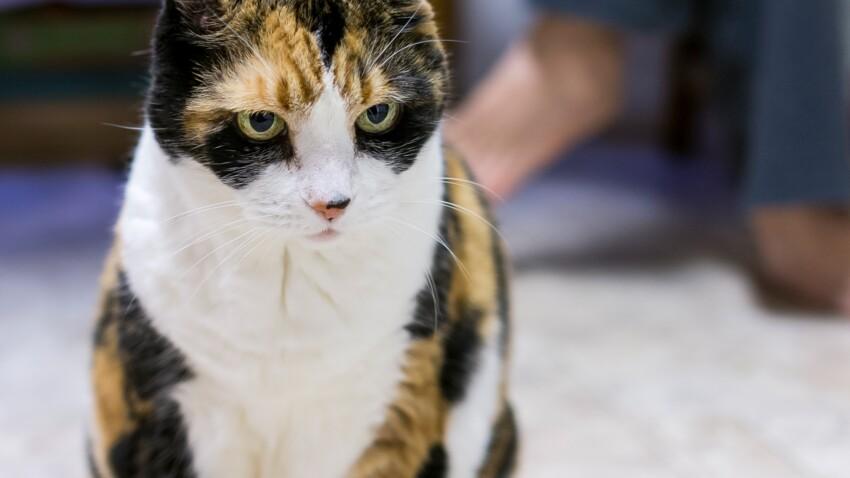 8 idées reçues sur ce que pensent les chats