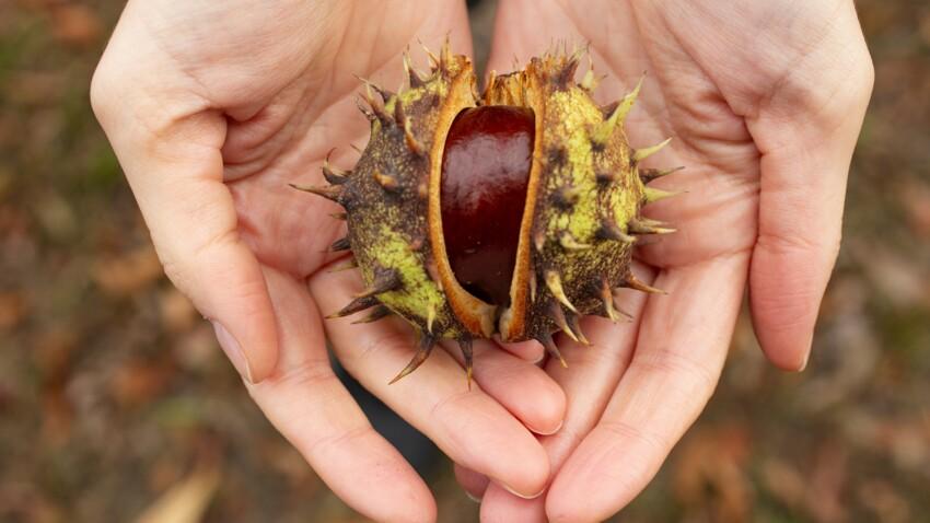 Marrons, châtaignes : comment les distinguer pour éviter tout risque d'intoxication