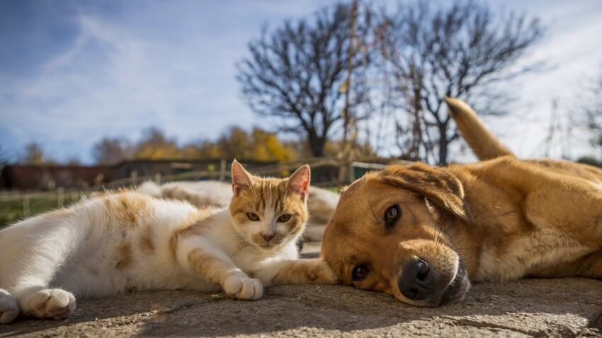 Pet parents : le match chien-chat