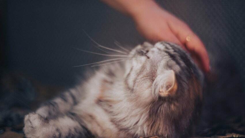 7 méthodes naturelles pour prendre soin de votre chat