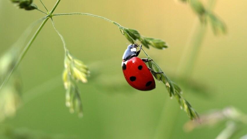 Coccinelle, libellule, luciole...tout ce qu'il faut savoir sur les petits insectes de l'été