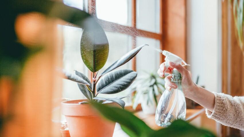 5 façons d'utiliser l'eau déminéralisée dans la maison
