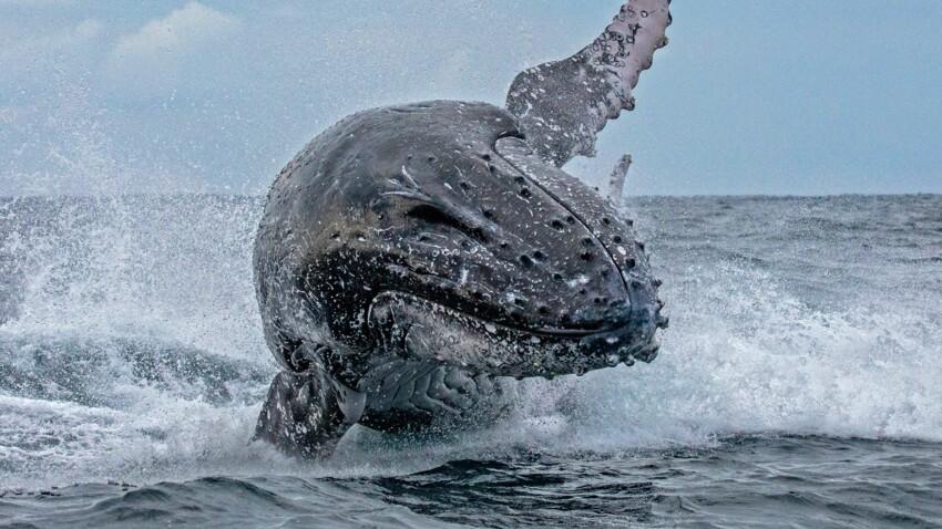 VIDÉO - Avalées par une baleine : les images hallucinantes de la mésaventure de deux kayakistes