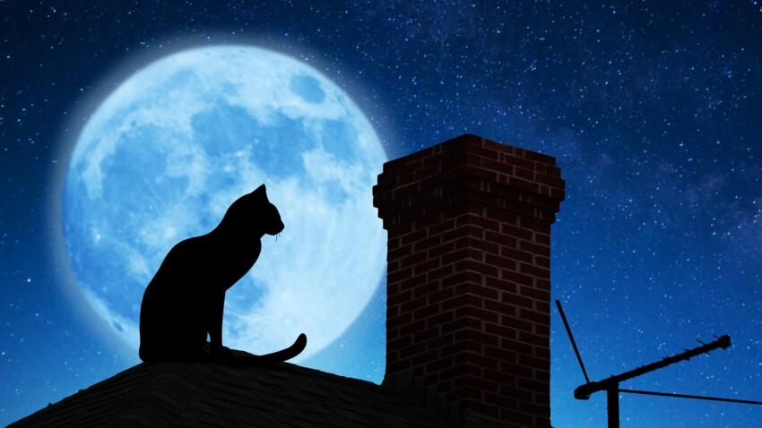 Superstition : zoom sur le chat noir