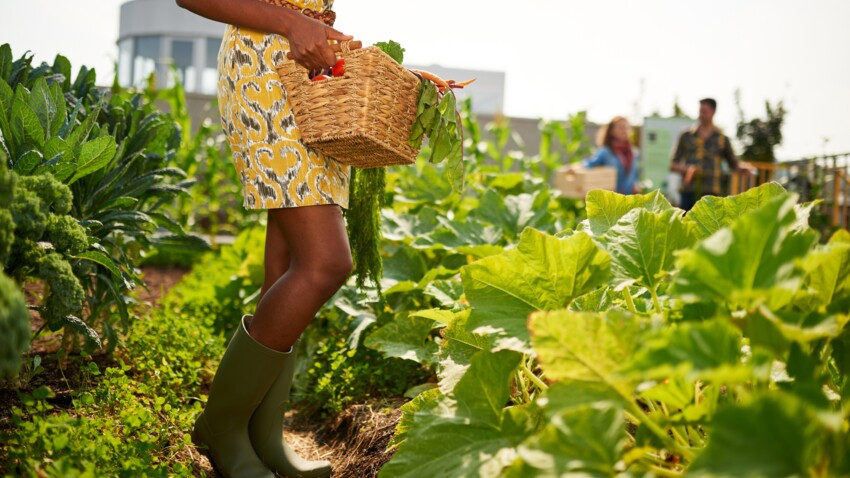 4 idées pour jardiner sans jardin