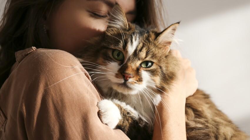Cette application qui traduit les miaulements de votre chat