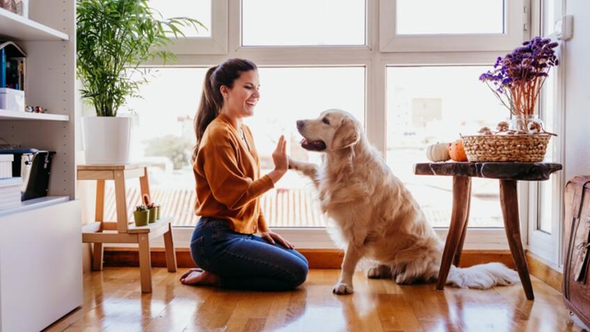 Reconfinement : 10 activités à faire en intérieur avec son chien