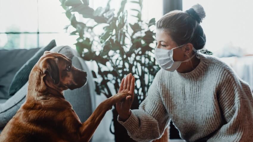 Covid-19 : les propriétaires de chiens auraient 78% de risques en plus d'être contaminés
