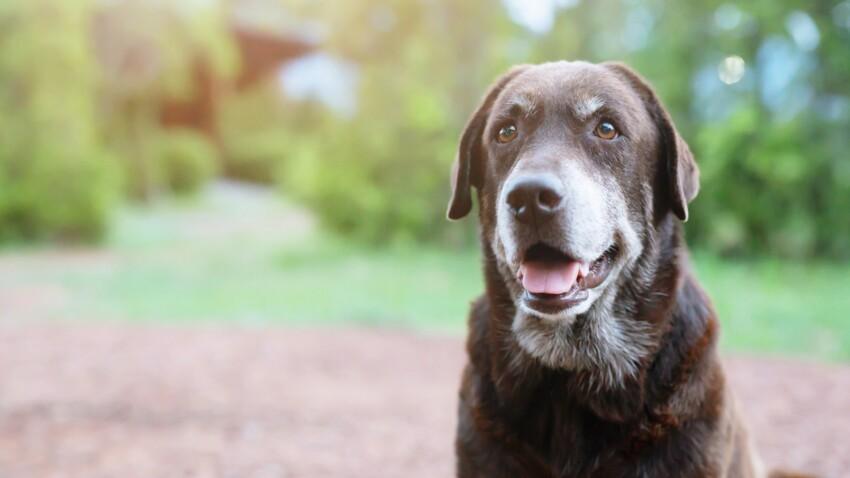 3 bonnes raisons d'adopter un animal senior !