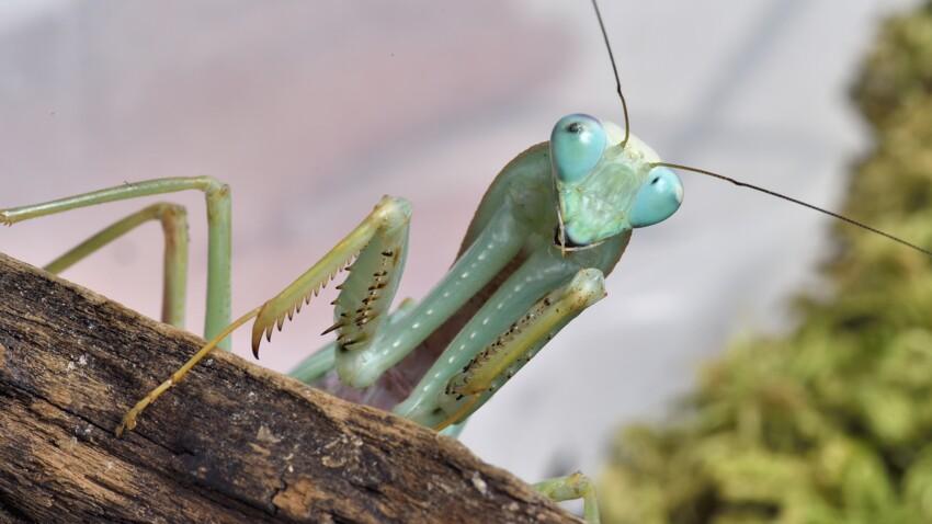Visite de Micropolis, la Cité des insectes