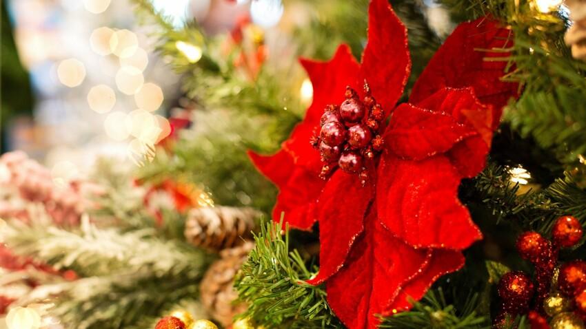 Comment bien entretenir son poinsettia ou étoile de Noël ?