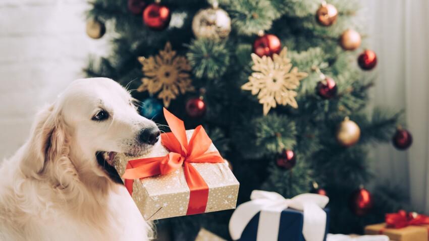 Découvrez combien de Français offrent un cadeau de Noël à leur animal