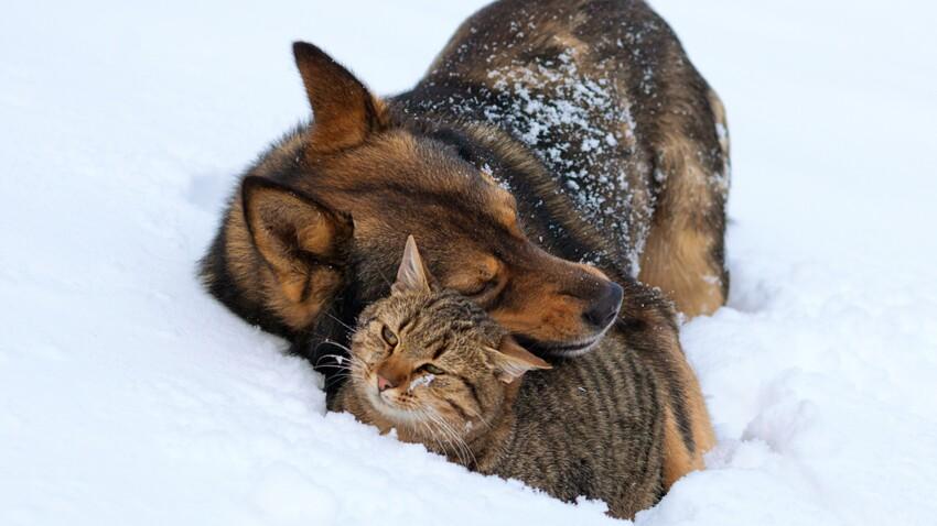 Chiens et chats : les dangers à éviter en hiver