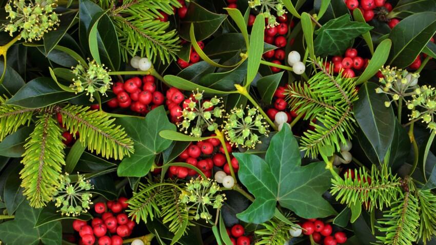 Gui, houx : attention aux plantes de Noël qui peuvent être toxiques