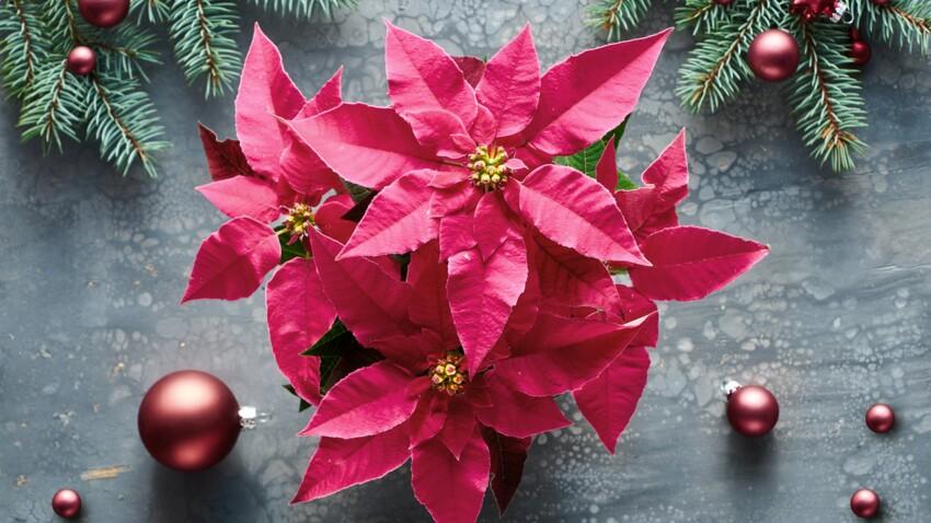 Quelles plantes ou fleurs offrir à Noël ?