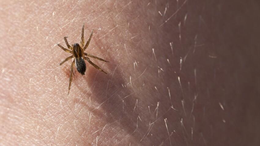 Piqûres d'araignée : comment les reconnaître ?