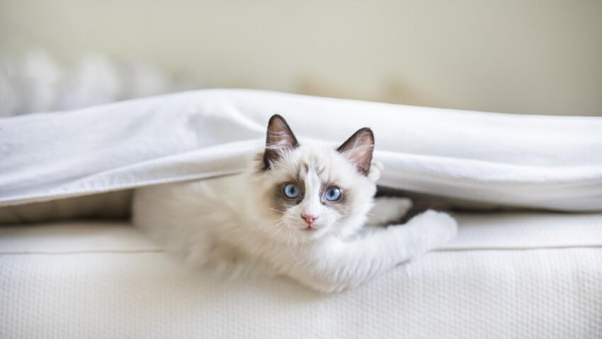 Mon chat a fait pipi sur le lit, comment se débarrasser de l'odeur ?