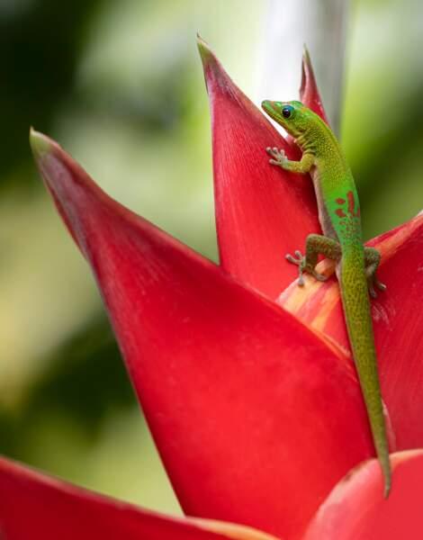 Une faune et une flore éblouissantes