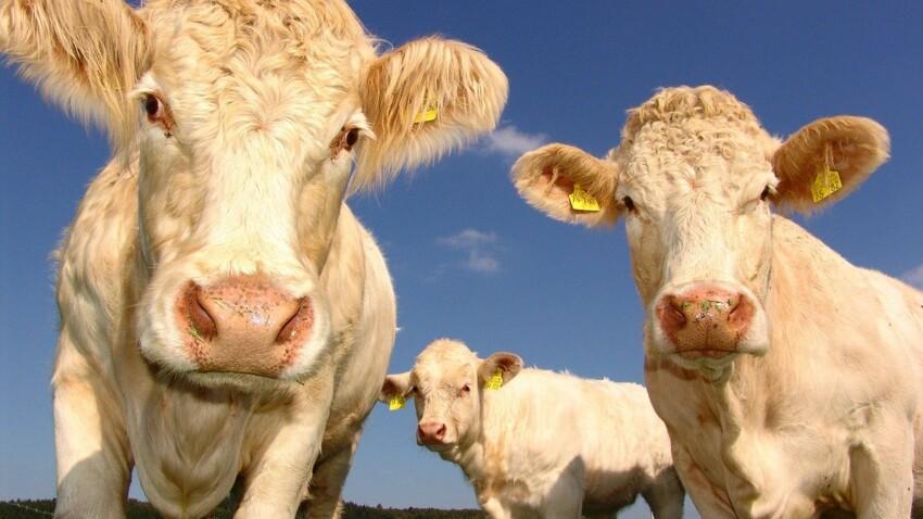 Viande et écologie, est-ce compatible ?
