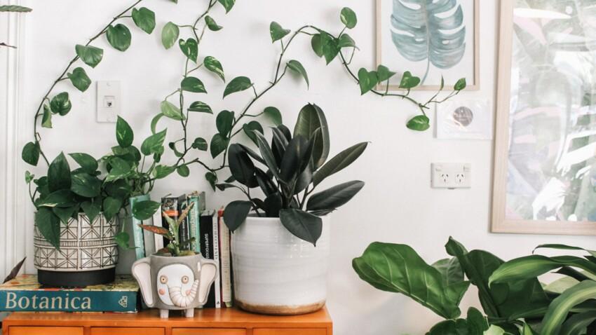 10 super astuces pour entretenir vos plantes d'intérieur