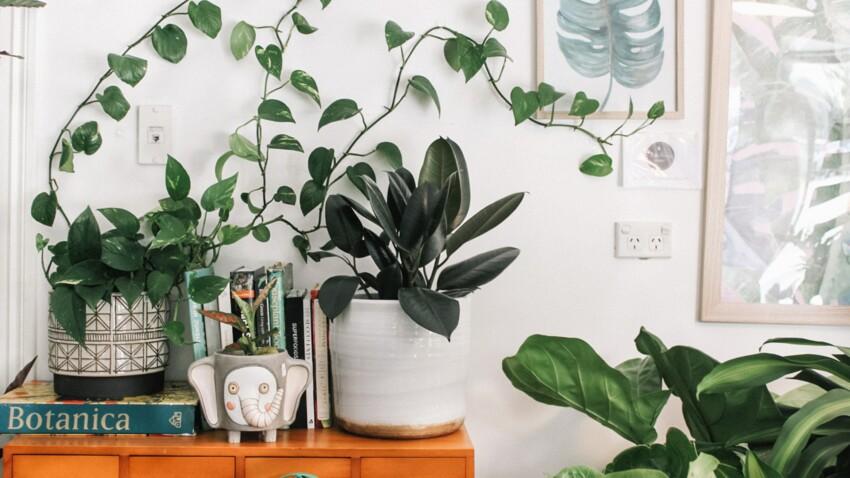 Jardin intérieur : nos astuces pour intégrer les plantes dans votre déco