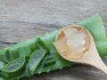 Aloe vera : mon allié santé au naturel
