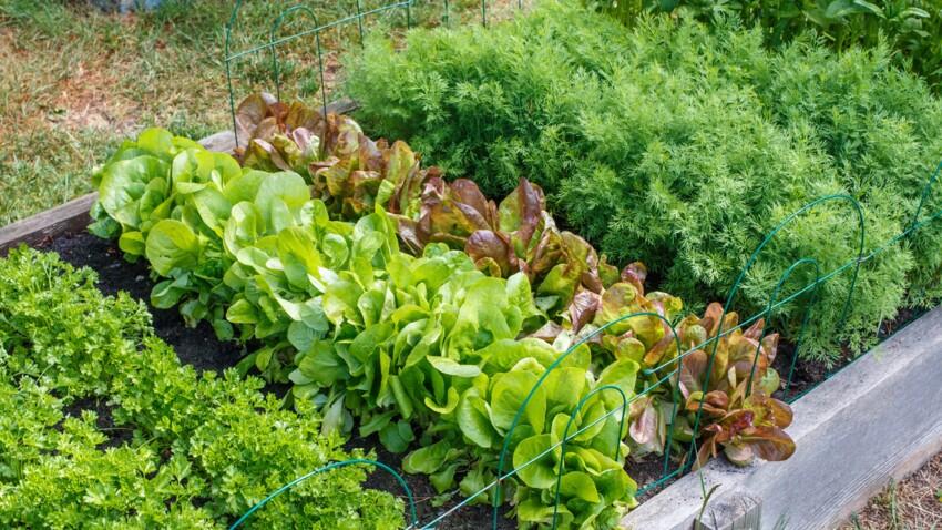 Jardin : 3 recettes faciles d'insecticides maison