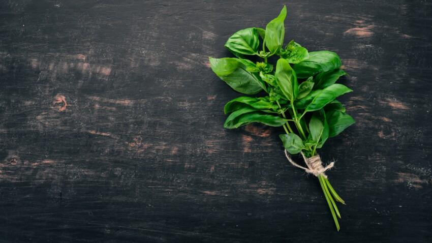 Nos astuces géniales pour réussir à faire pousser du basilic