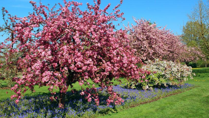 3 arbres à la floraison généreuse à planter à la fin de l'hiver