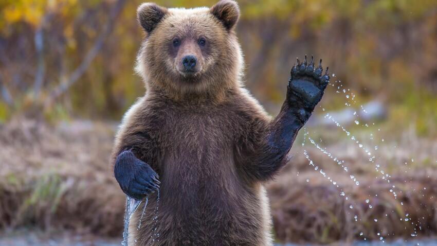 Découvrez ces lieux qui portent un nom d'ours