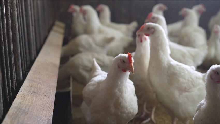 Grippe aviaire H5N8 : doit-on s'inquiéter du premier cas de transmission à l'humain signalé en Russie ?