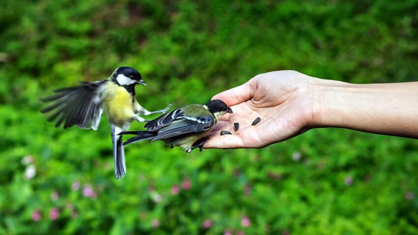 Comment reconnaître les oiseaux de mon jardin (et nos conseils pour en prendre soin)