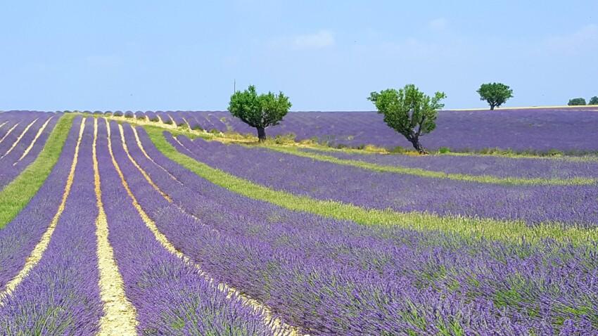 Voyage en Provence : nos conseils pour bien visiter les champs de lavande