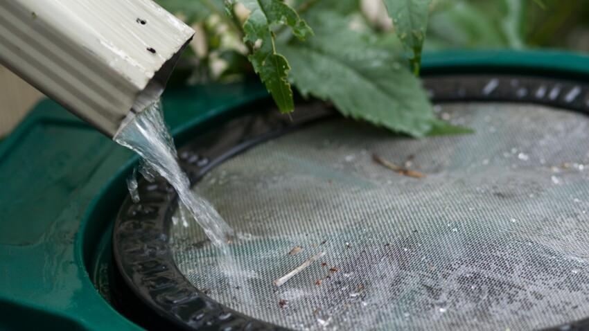 Récupérateur d'eau de pluie : comment le choisir ?