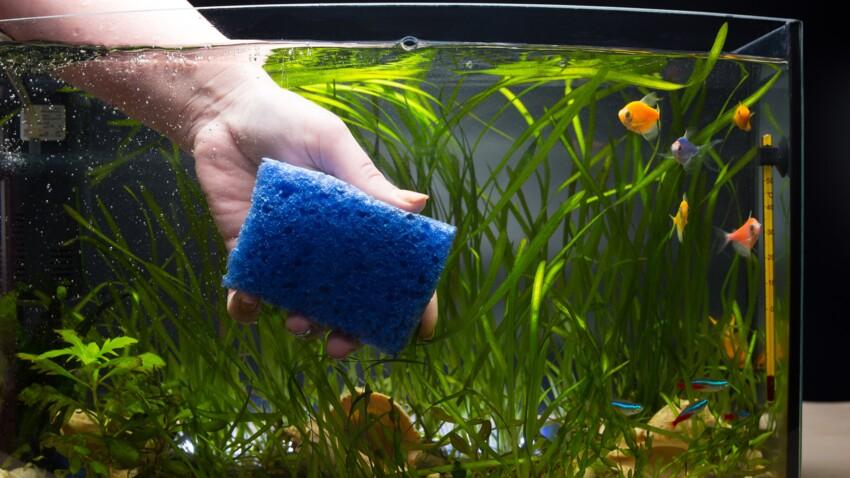 Toutes nos astuces pratiques pour bien nettoyer son aquarium