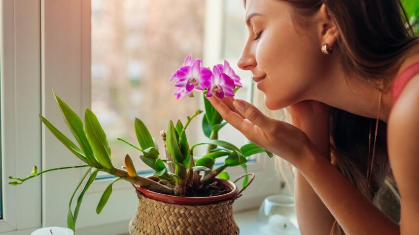 Perte d'odorat: quelles sont les solutions les plus efficaces?