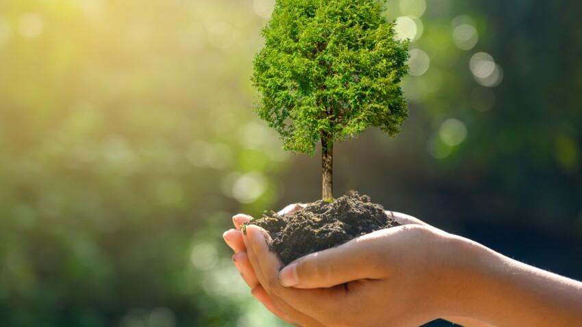 Acheter un arbre, un bon investissement ?