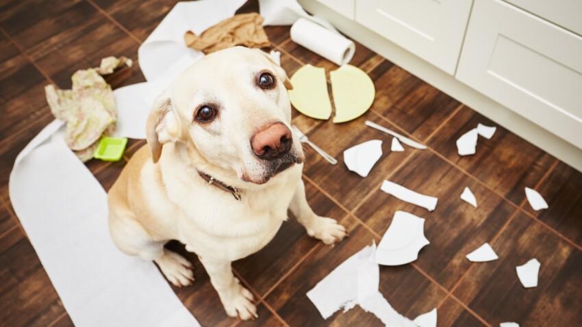 Suis-je responsable des dégâts causés par mon animal ?