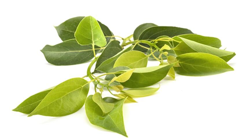 Ravintsara : quels sont ses bienfaits santé et comment l'utiliser ?