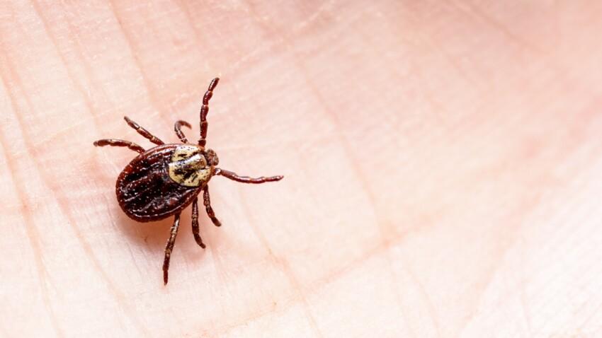Maladie de Lyme : comment savoir si les tiques vont se multiplier près de chez vous ? Une étude répond