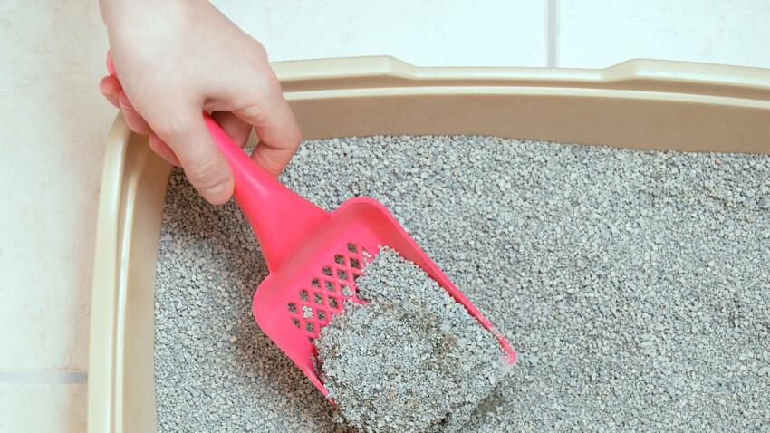 Nos conseils pour bien nettoyer la litière de son chat