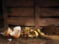 Ne jetez plus vos déchets, réutilisez-les pour nettoyer la maison